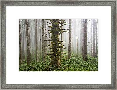 Cummins Wilderness Area Framed Print by Leland D Howard