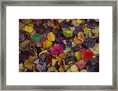 Curbside Leaf Litter Framed Print by Robert Ullmann