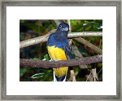 Curiosity   Framed Print by Morning Dew