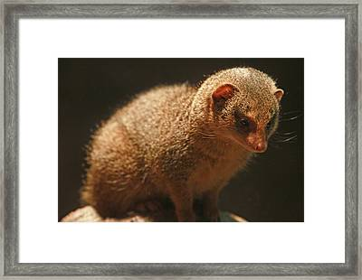 Framed Print featuring the photograph Curiosity At Rest by Laddie Halupa