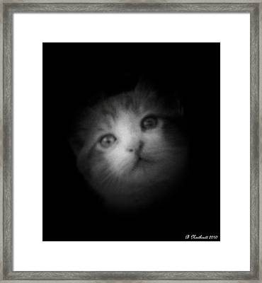 Framed Print featuring the photograph Curiosity by Betty Northcutt