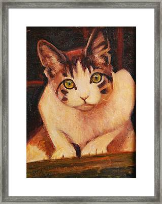 Curiosity Framed Print by Billie Colson