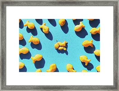 Curiosity Framed Print