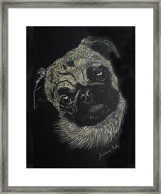 Curiosity Of The Pug Framed Print by Jessica Kale