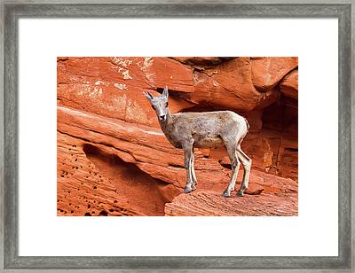Curiosity Stop Framed Print by James Marvin Phelps
