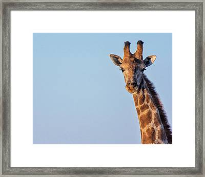 Framed Print featuring the photograph Curious 1 by Rand