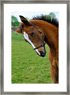 Curious Baby Framed Print by Pat Shawyer
