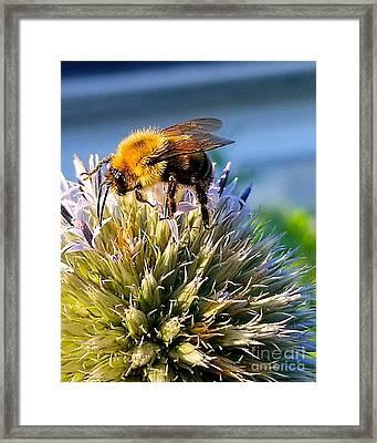 Curious Bee Framed Print