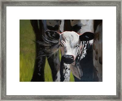 Curious Calf Framed Print