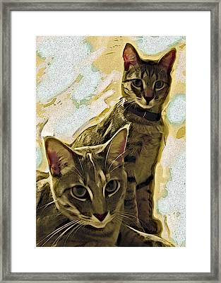 Curious Cats Framed Print by David G Paul