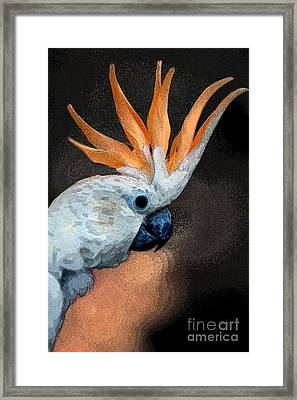 Curious Cockatoo  Framed Print by Norman  Andrus