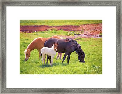 Curious Colt And Mares Framed Print