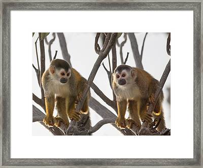 Curious Couple Framed Print by Betsy Knapp