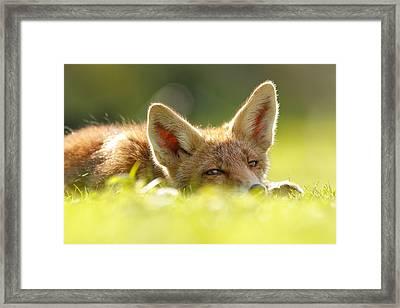 Curious Fox Kit Framed Print