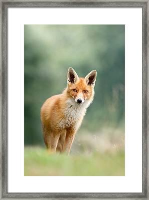 Curious Fox Framed Print by Roeselien Raimond