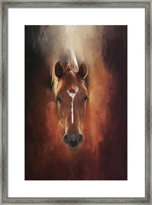Curious Gaze  Framed Print