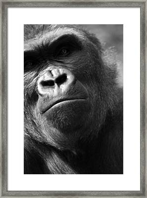 Curious George Framed Print by Brad Scott