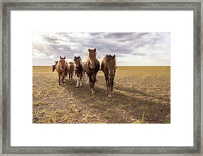 Framed Print featuring the photograph Curious Horses by Hitendra SINKAR