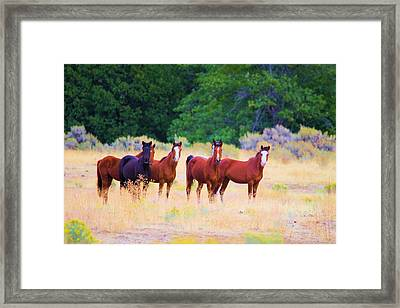 Curious Horses Framed Print by Jeff Swan