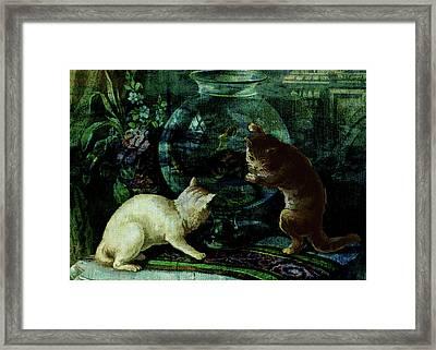 Curious Kittens Framed Print by Sarah Vernon