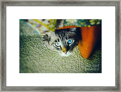 Framed Print featuring the photograph Curious Kitty by Silvia Ganora