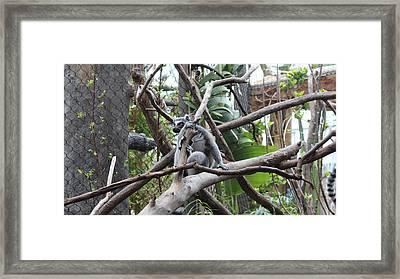 Curious Lemur  Framed Print by Tim Michael Ufferman