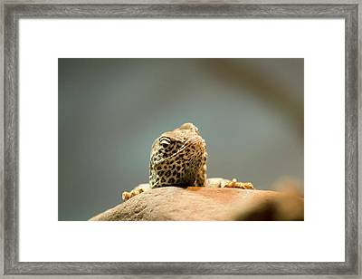 Curious Lizard Framed Print