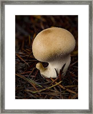 Curious Mushroom Framed Print by Jean Noren