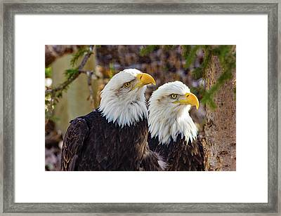 Curious Ones Framed Print