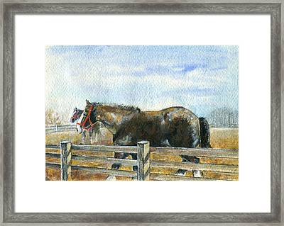 Curious Pair Framed Print by Mary Armstrong