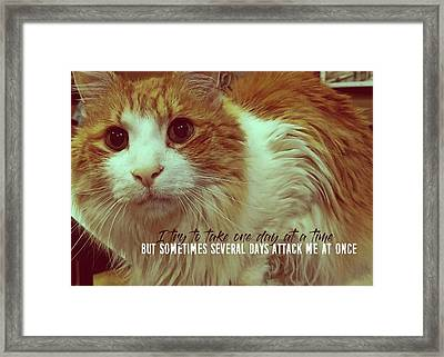 Curious Quote Framed Print by JAMART Photography
