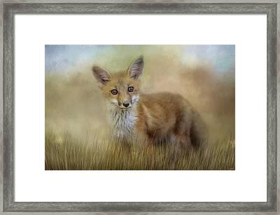 Curious Red Fox Framed Print by Jai Johnson