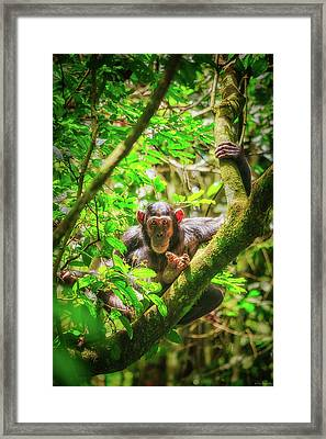 Framed Print featuring the photograph Curious by Rick Furmanek