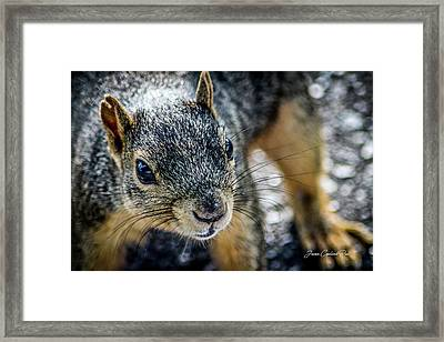 Framed Print featuring the photograph Curious Squirrel by Joann Copeland-Paul