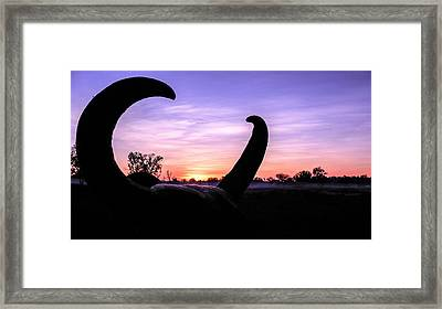 Curious Sunrise Framed Print