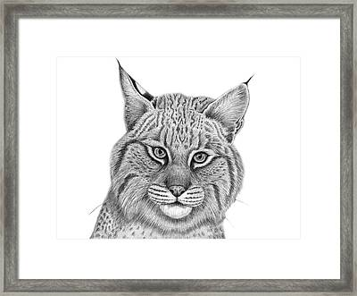 Curious Framed Print by Tammy Liu-Haller