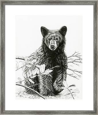 Curious Young Bear Framed Print