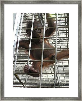 Curious Zoo Baby  Framed Print by Wendy W Sierra