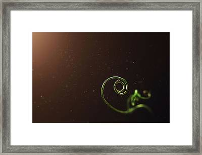 Curl - A Pea Pod Shoot Framed Print by Scott Norris