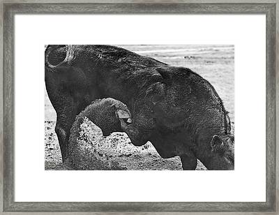 Curl And Wave Framed Print