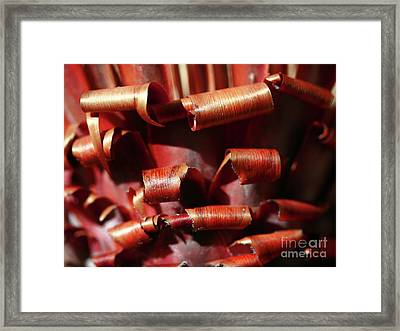Framed Print featuring the photograph Curl Up And Die by Stephen Mitchell