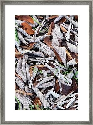 Curled Leaf Litter Framed Print