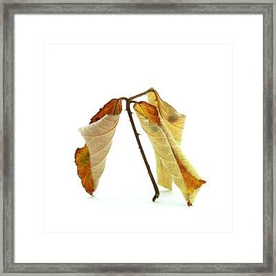 Curled Leaves Framed Print