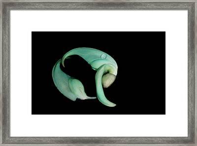 Curled Together Framed Print
