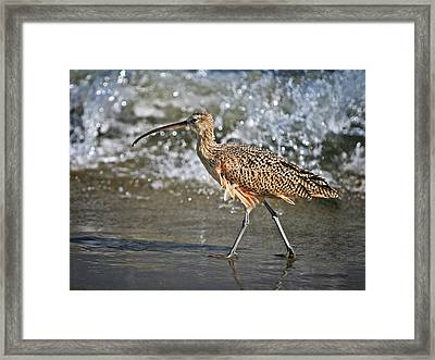 Curlew And Tides Framed Print