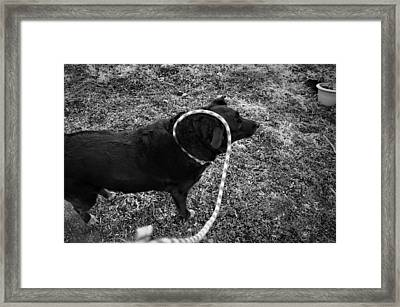 Framed Print featuring the photograph Curling by Jeanette O'Toole