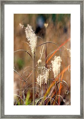 Curls And Fluff Framed Print
