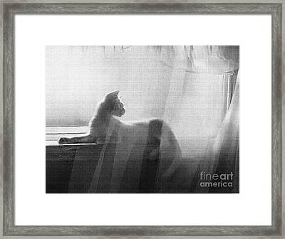 Curtain Light Framed Print by Robert Foster
