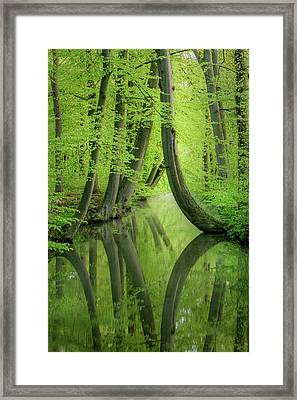 Curved Trees Framed Print