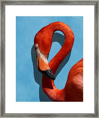 Curves, A Head - A Flamingo Portrait Framed Print